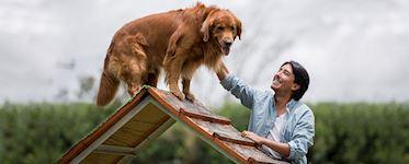 Dog Walking & Pet Sitting