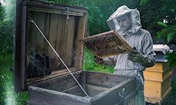 Diploma in Bee Farming