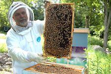 Beekeeping Diploma