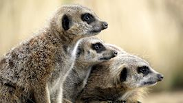 Zoo Keeping