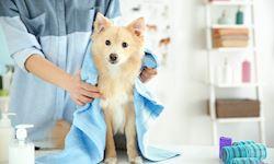 Dog Grooming+Dog Training