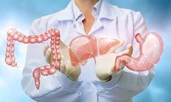 Human Body: Anatomy & Physiology