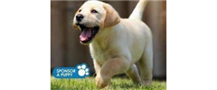 Jobs from Guide Dogs for the Blind